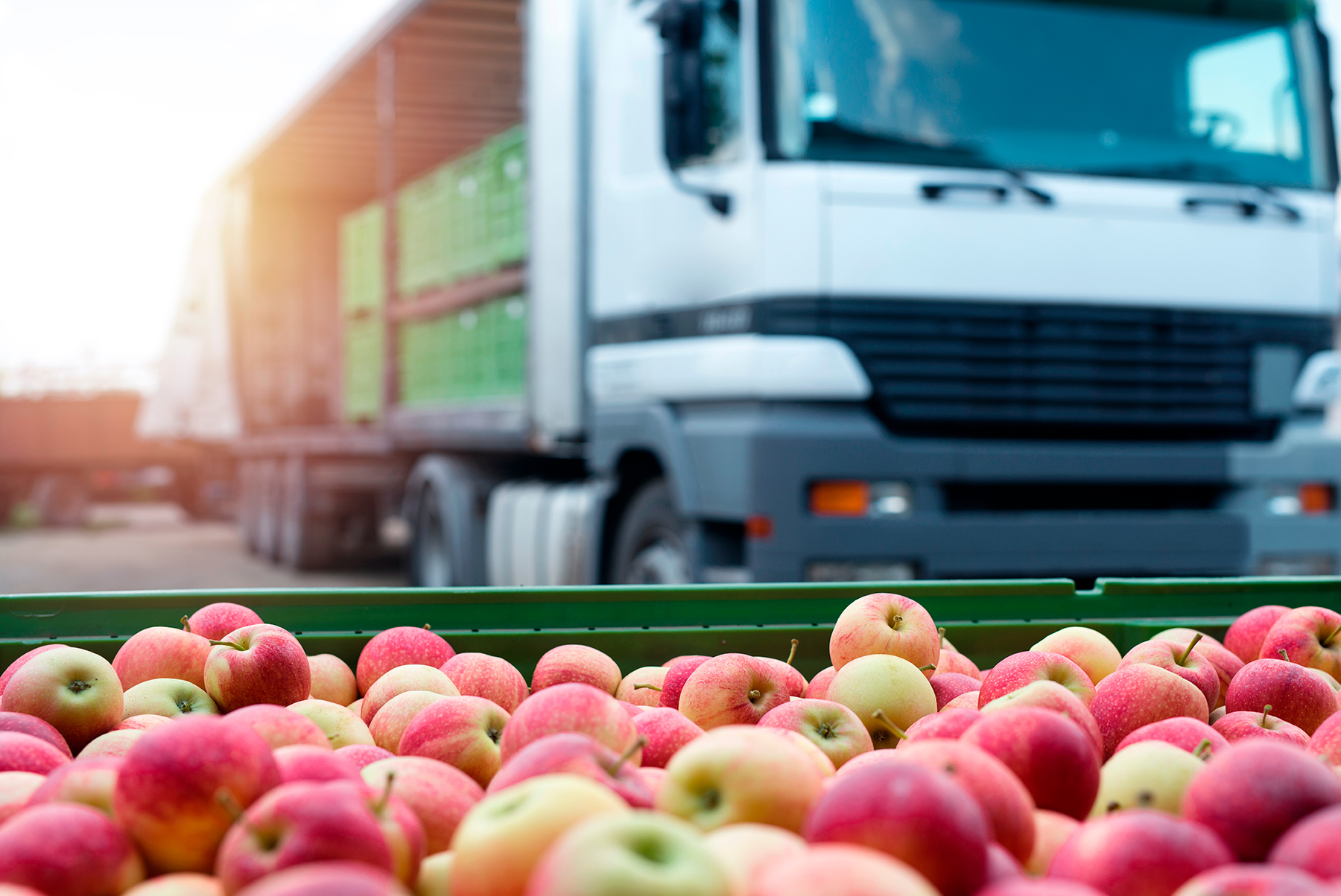 Apples in crate by lorry