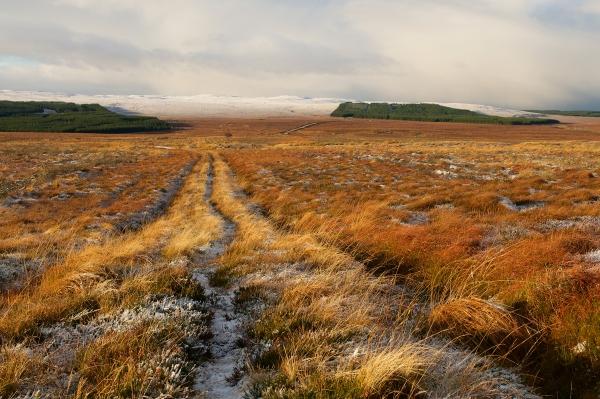 Peatland with cloudy sky