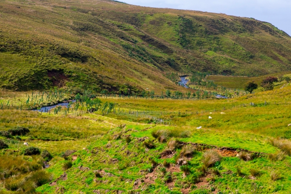 Peatland with rolling hills in the background