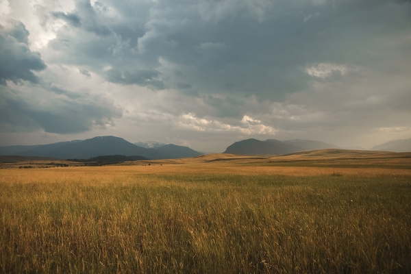 Wheat field and stormy rain clouds